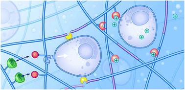 Comprehensive Review on Dynamic Hydrogels